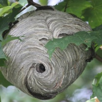 Wasps Destroyed 07787758033