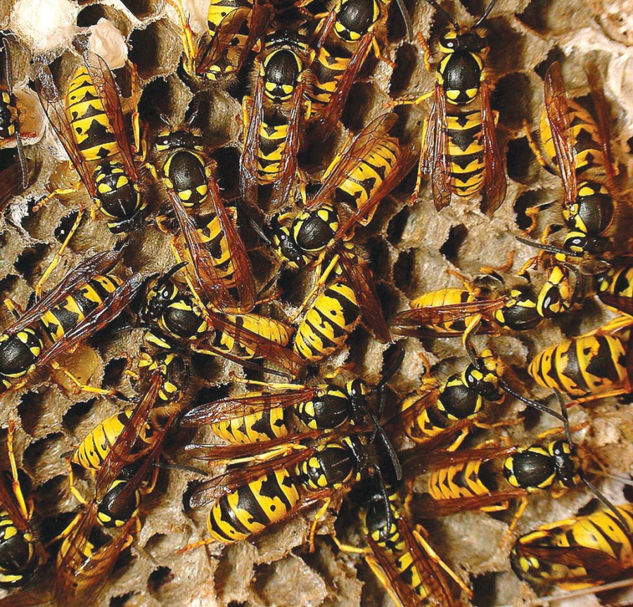 Wasps Destroyed 07787758033